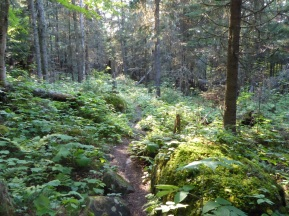 Hiking Trail Isle Royale