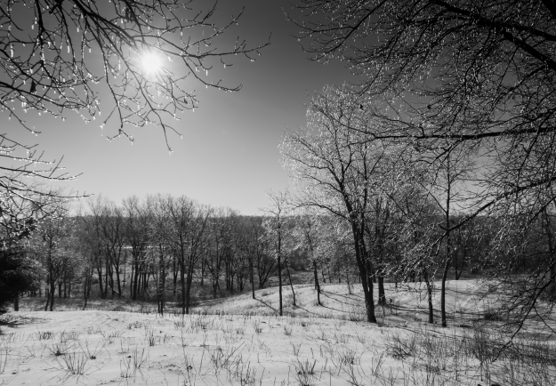 After the Ice Storm, Pheasant Branch Conservancy, Blk/Wht